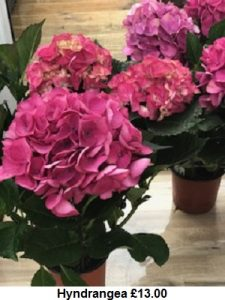 Hyndrangea 2| Florists Widnes | Flowers by Carol